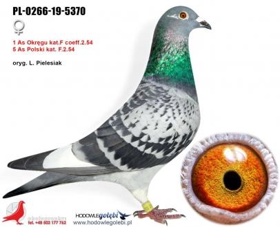 GOL_3D9074-B51881-7D36DD-978E9C-8A0B14-328D48.jpg