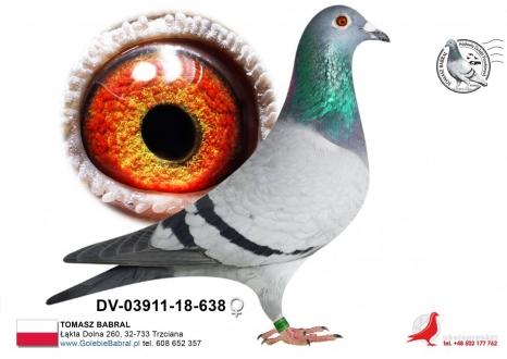 GOL_3F9025-604183-7B645C-7CFC1D-4645DC-541649.jpg