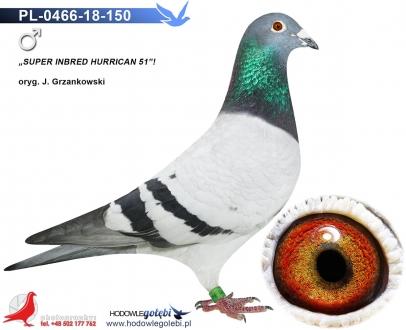 GOL_425A1B-4C095D-C82620-01B449-0C3EA7-75F650.jpg