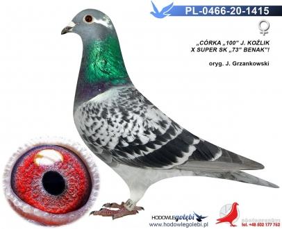GOL_4297B9-8E7640-4C5090-9131EC-07D337-140318.jpg