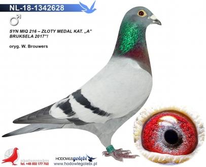 GOL_42F9E9-A9C90D-ECB5DD-B867B0-5A6DEE-F22755.jpg