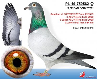 GOL_45213F-73E2D6-84C111-89F921-27B8EE-33424A.jpg