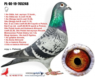 GOL_46D8ED-A2439F-D20B13-4A4026-B37F83-39554A.jpg