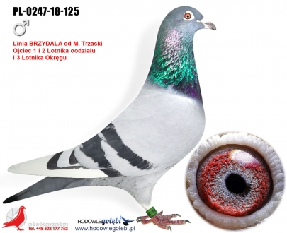 GOL_48BB57-1C83FC-03B2E3-12CB8D-CC9BDE-242727.jpg