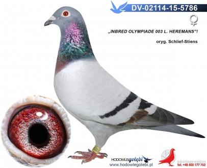 GOL_4AA0D2-97E0E7-4AB1A9-CC8DE8-E6A43C-AD571F.jpg