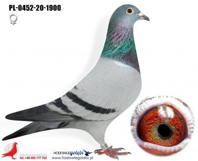 GOL_4B10E0-25B126-26B8CF-3EA01C-C6C48C-5B4CBE.jpg