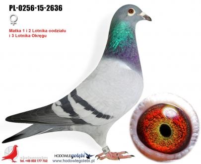 GOL_4F31A2-B8D0D4-2CC168-A82A03-520C0B-915BDE.jpg