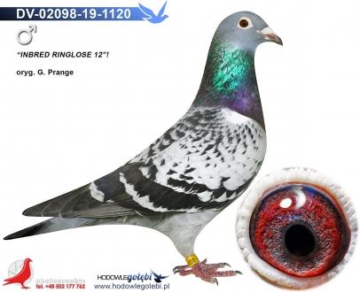 GOL_527608-B4A158-2D387F-0BC255-30DD64-CFE68D.jpg