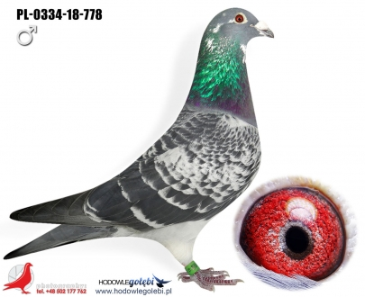 GOL_53917A-BCE93B-15DA34-0F972C-43E507-E96E31.jpg
