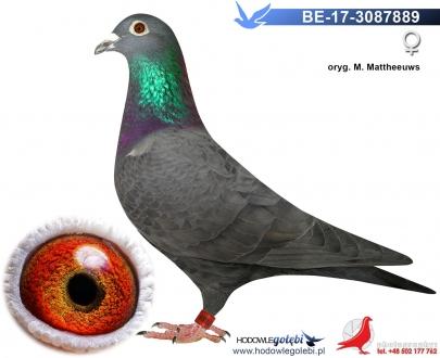GOL_540D99-CECA99-9EC519-DEFC44-7F2193-0CBD96.jpg