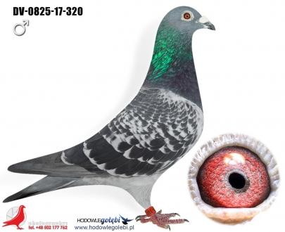 GOL_58B522-5EC948-A14555-D9A90A-B933E3-BC9748.jpg