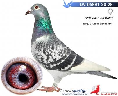 GOL_591F2E-C27630-37F18A-C67BEA-BE3A7F-3473BA.jpg