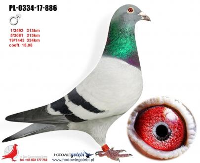 GOL_5ACD56-D3410D-801BCE-87B4BB-451DD8-FD3D0D.jpg