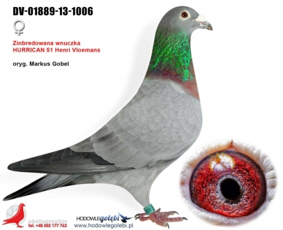 GOL_5BB497-4FF844-3EF14D-8F7817-A34A38-6CBCDD.jpg