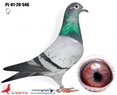 GOL_5CEDFA-0B42DA-DABEB5-00281A-6CF84A-E72330.jpg