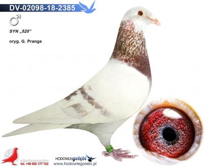 GOL_5E9705-600E62-5CC1A7-842FFF-2944A6-81332E.jpg