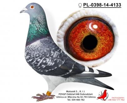 GOL_6143BD-31BE62-DDB942-CF7706-EA9866-272332.jpg
