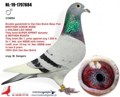 GOL_629497-3D7C1C-E2934E-2E868A-BBFFDF-E0D45A.jpg