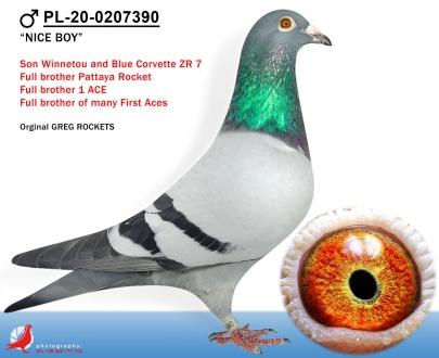 GOL_62D952-F3DF5B-15307F-E1BE86-3A3F21-C82AFB.jpg