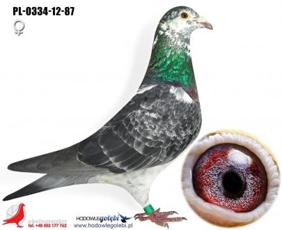 GOL_63DE2D-B635B2-4B99E5-DE1DC8-5B43DE-FC875B.jpg