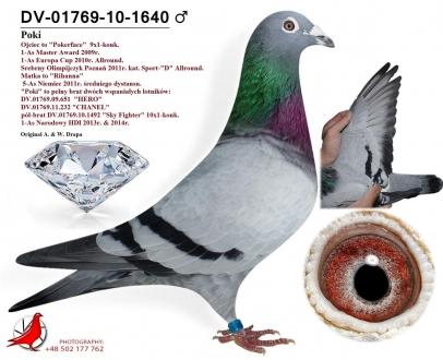 GOL_642338-3C5EC0-DC0F67-13614E-DFB633-27F9AE.jpg