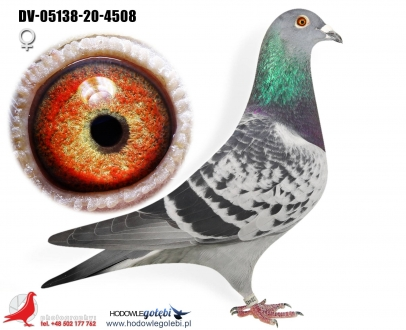 GOL_665945-D6FC03-B857CB-B9BF7D-E703F8-64CBF8.jpg