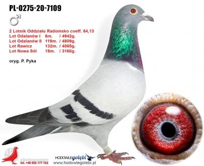GOL_67751A-A57FA2-136A86-85D976-523BC6-4C2FE8.jpg