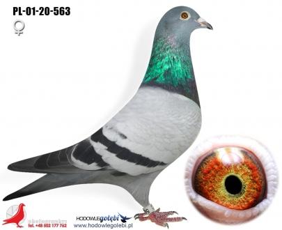 GOL_698636-D5D9CD-A29B35-5CDBFF-BB6602-BB8BAB.jpg