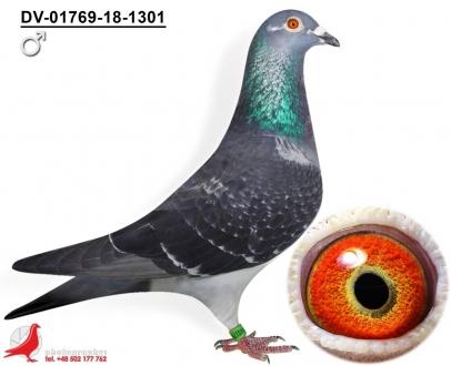 GOL_6C3A07-5D4828-B541B1-B5B1A3-2A0433-E8077E.jpg