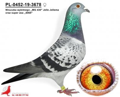 GOL_6DF996-CFFC41-520DC0-9FC931-988371-92415A.jpg