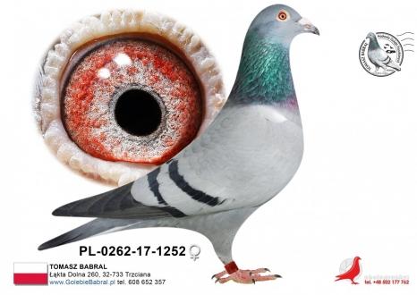 GOL_6E9B99-EBDA4D-31E867-36F7C0-66A185-B3956E.jpg