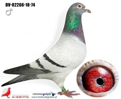 GOL_7001DB-5E5F3A-B642CD-46D4DB-F55F57-2E4BCB.jpg