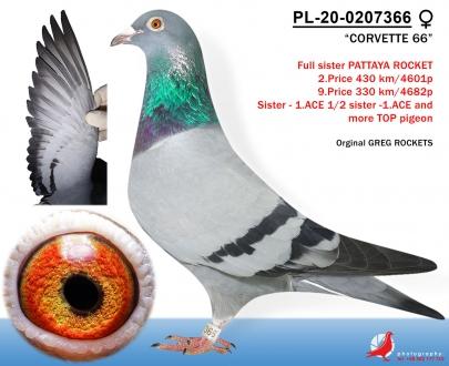 GOL_718F84-3D3636-AAE6DA-76EDD9-E901B5-8F4E5E.jpg