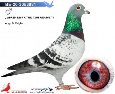 GOL_7200B8-EF53A9-0D90C0-FC6E10-8A7C38-A7A740.jpg
