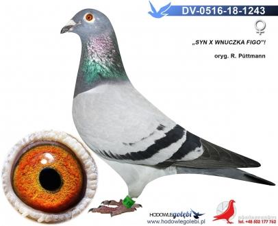 GOL_736E1B-DF0EB2-394839-A3C001-F70A9B-13A895.jpg