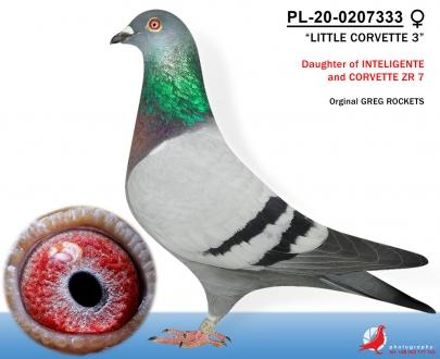 GOL_73F5DF-D04F40-B8AB59-566FA9-6A9A11-4D1DE2.jpg