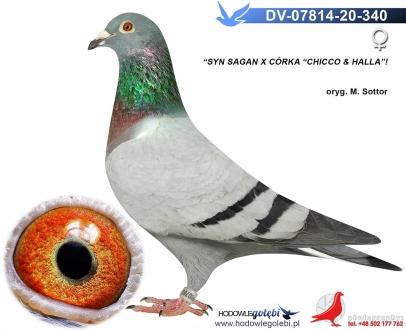 GOL_7472CE-9FD63B-9B0A9F-A0F7CD-212EE9-7B7D68.jpg