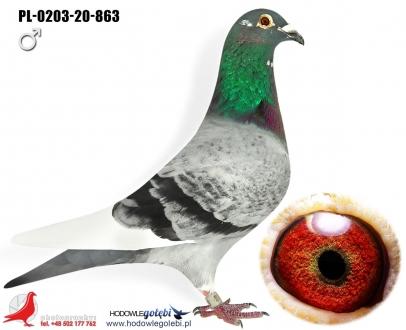 GOL_749780-A87A19-ACD0CA-4DC7A8-C33DF8-622A63.jpg
