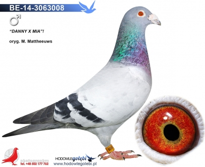 GOL_74BD0A-D828FA-F969CD-BAD3FD-00B445-E80402.jpg