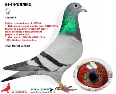GOL_775CED-8FFCA6-DFEBCD-47BC15-0D4A2E-528690.jpg