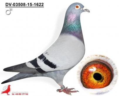 GOL_778E75-524AF3-AEF5A1-ECDF70-E8469E-50450C.jpg