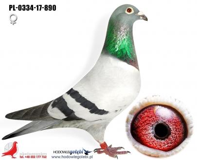 GOL_7912D8-831EE7-40CFB3-70071A-2D26DC-F27F71.jpg