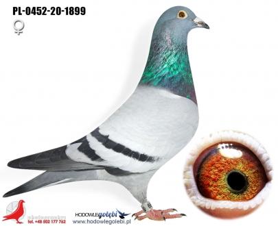 GOL_79797D-047667-CA4614-ECB294-D96D2F-8F4F21.jpg