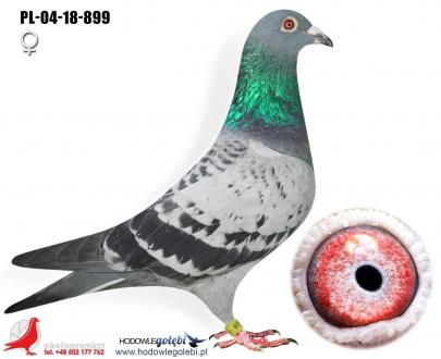 GOL_7DA905-125FDD-545C99-2F4B81-E45006-7CC3AF.jpg