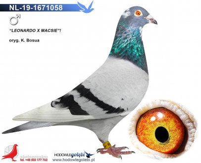 GOL_7E2690-EDE035-C9F191-39513C-187739-6FF180.jpg