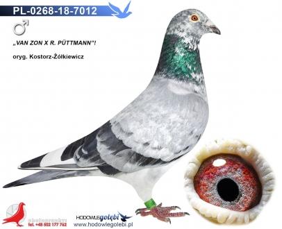 GOL_7E6A6C-A68311-6FAE66-59E134-D5FCE7-9D0D7E.jpg