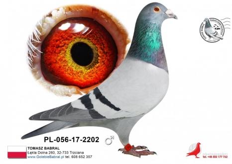 GOL_80C1F3-CE1EED-E31A31-1D2285-6F5A6C-71557C.jpg