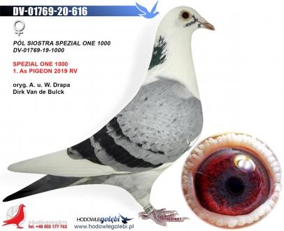 GOL_833DB3-14047E-0468C2-DABEFF-C2828E-2FAA75.jpg
