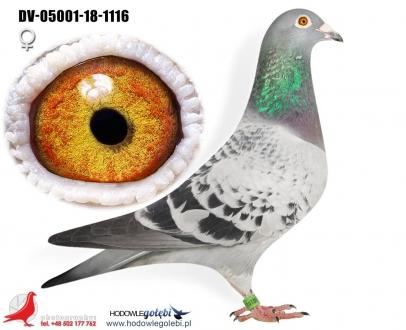 GOL_848125-D85CB1-AAFBBC-E01A0D-F46353-08A306.jpg