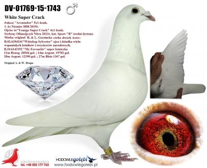 GOL_88465A-81FBED-6B04D9-663009-998AF4-7B32A2.jpg